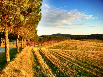 Fields near Montepulciano