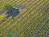 Vineyards near Montalcino