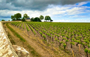 Pauillac vineyards